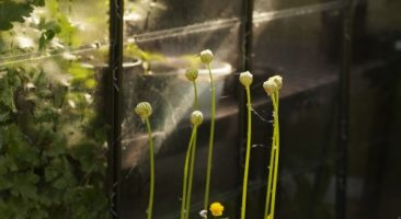 Mindful kijken naar de tuin. Sfeer en details zien